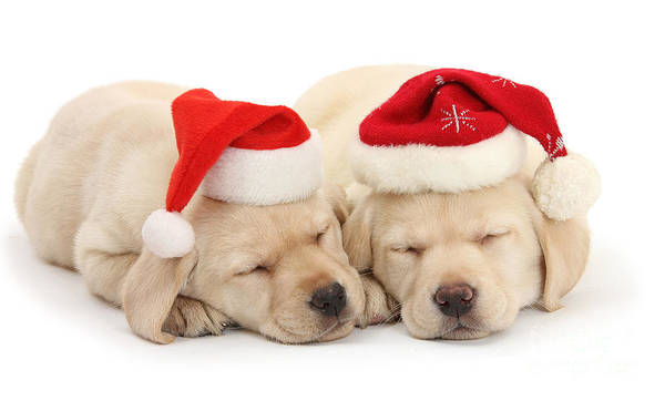 Photograph - Santa's Helpers Sleeping by Warren Photographic