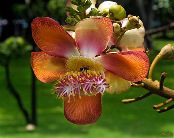 Photograph - Sara Tree Flower Dthb104 by Gerry Gantt