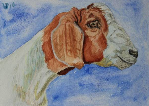 Painting - Sara's Goat by Vera Smith