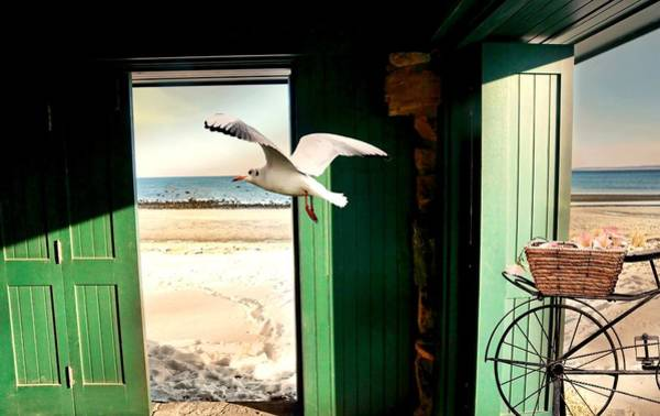 Just Birds Photograph - Sounding Off by Diana Angstadt