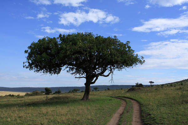 Photograph - Sausage Tree, Masai Mara National Park by Aidan Moran