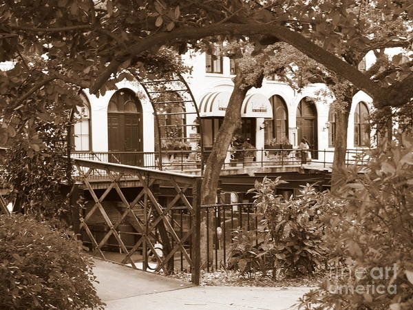 Photograph - Savannah Arches In Sepia by Carol Groenen