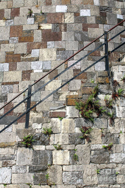Photograph - Savannah Block Wall Vertical by Carol Groenen