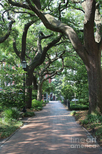 Photograph - Savannah Sidewalk With Trees by Carol Groenen