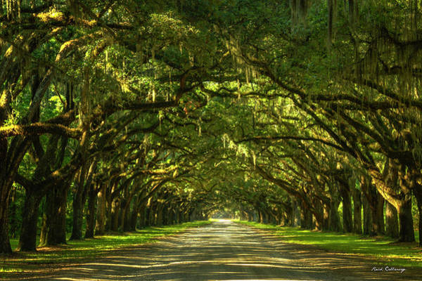 Photograph - Savannah Wormsloe Plantation Live Oak Alley Art by Reid Callaway
