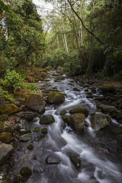 Photograph - Savegre River - Costa Rica 4 by Kathy Adams Clark