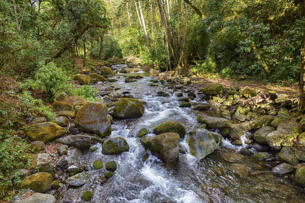 Photograph - Savegre River - Costa Rica by Kathy Adams Clark