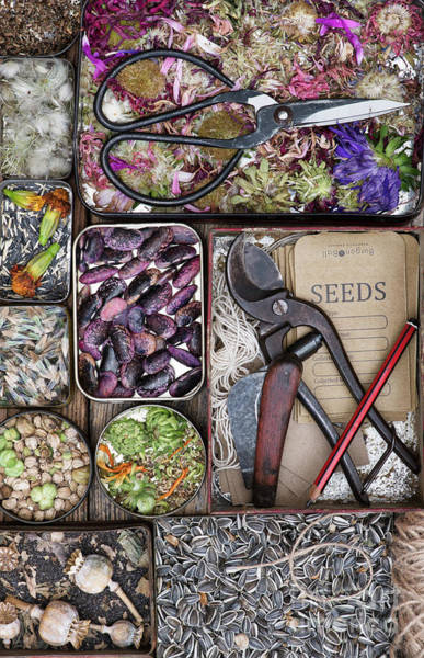 Harvesting Wall Art - Photograph - Saving Seeds by Tim Gainey