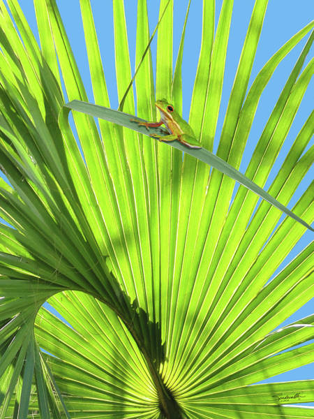 Palm Frond Digital Art - Saw Palmetto And Frog by M Spadecaller