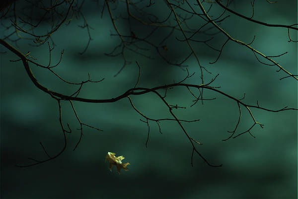 Digital Art - Saying Goodbye by Robin Webster