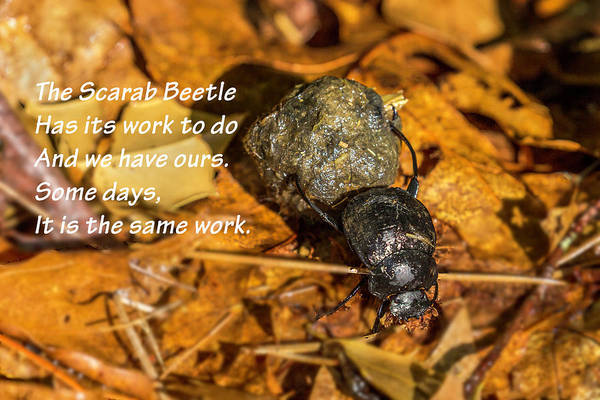 Photograph - Scarab Beetle Poster 01 by Jim Dollar