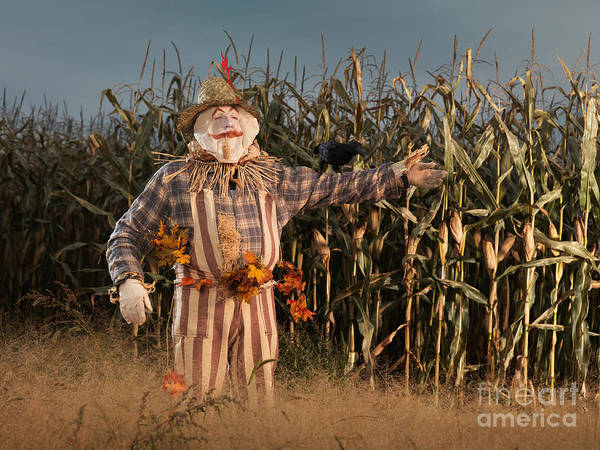 Bugaboo Photograph - Scarecrow In A Corn Field by Oleksiy Maksymenko