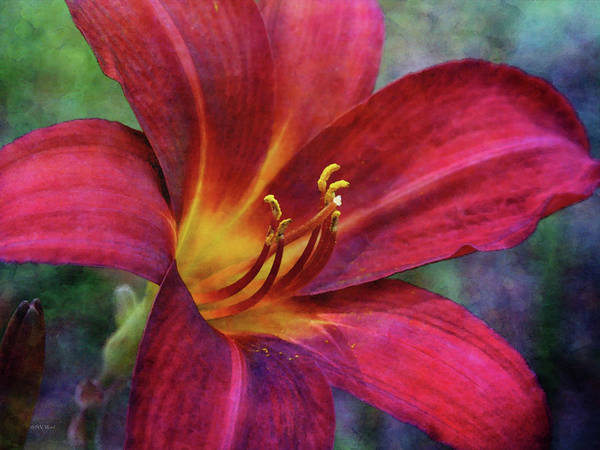 Photograph - Scarlet And Gold Dust 3716 Idp_2 by Steven Ward