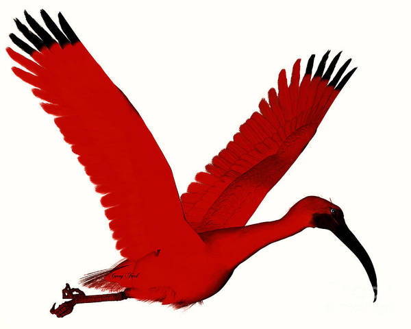 Ibis Painting - Scarlet Ibis by Corey Ford