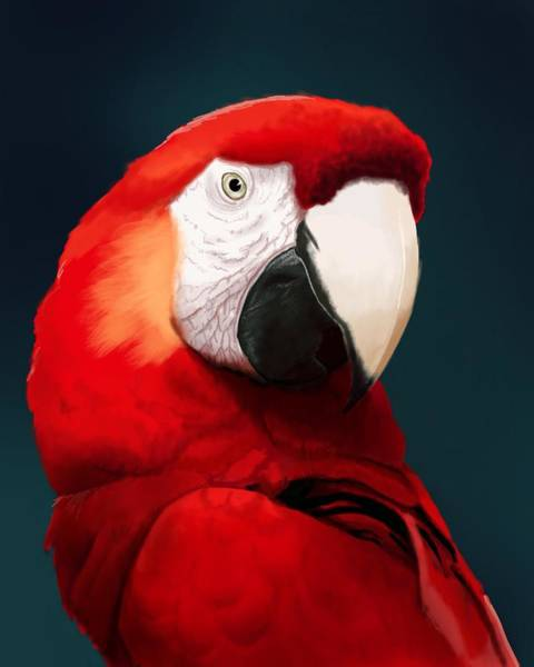 Tropical Bird Wall Art - Digital Art - Scarlet Macaw by KC Gillies