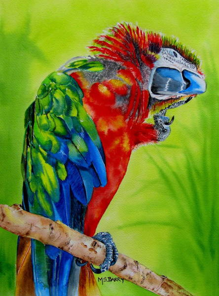 Wall Art - Painting - Scarlet Macaw by Maria Barry