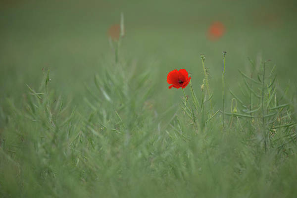 Photograph - Scarlet On Green by Peter Walkden