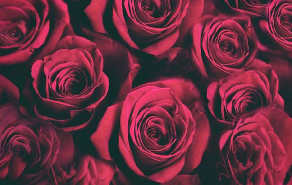 Photograph - Scarlet Roses by Jessica Jenney