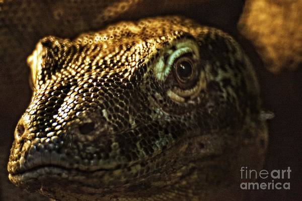 Photograph - Scary Lizard by Doc Braham