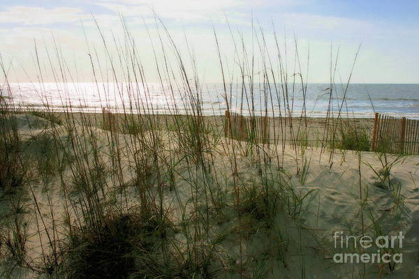 Photograph - Scene From Hilton Head Island by Angela Rath