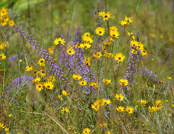 Liatris Spicata Photograph - Scene Of Flowers In The Ditch by rd Erickson