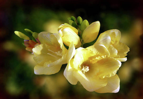 Photograph - Scent From Heaven by Valerie Anne Kelly