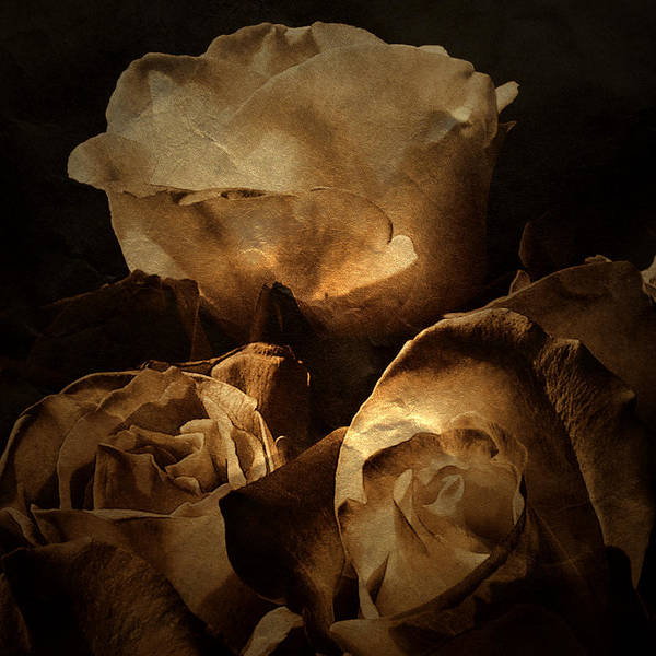 Earthtones Photograph - Scent Of A Memory by Bonnie Bruno