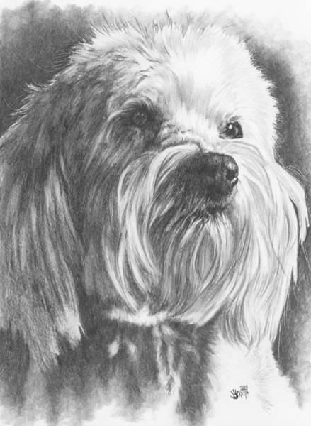 Mutt Drawing - Schnoodle by Barbara Keith
