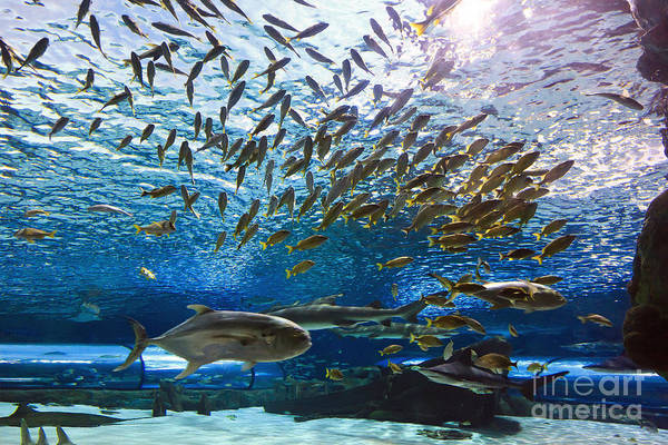 Photograph - School Of Fish by Jill Lang