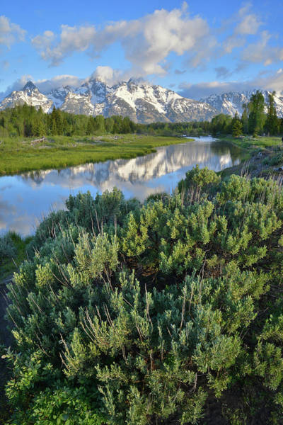Photograph - Schwabacher Landing In Grand Teton by Ray Mathis