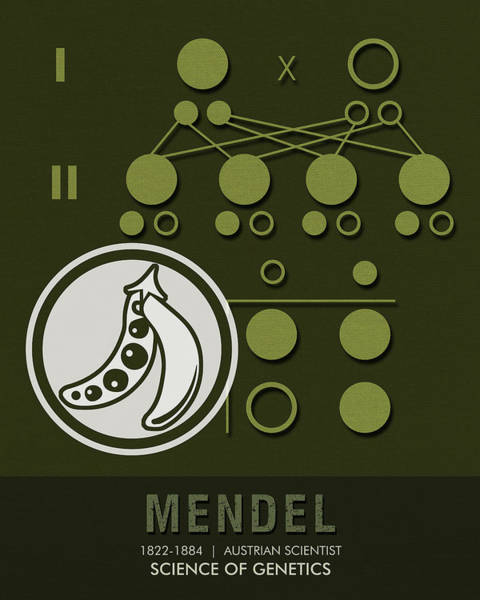 Cool Mixed Media - Science Posters - Gregor Mendel - Geneticist, Scientist by Studio Grafiikka