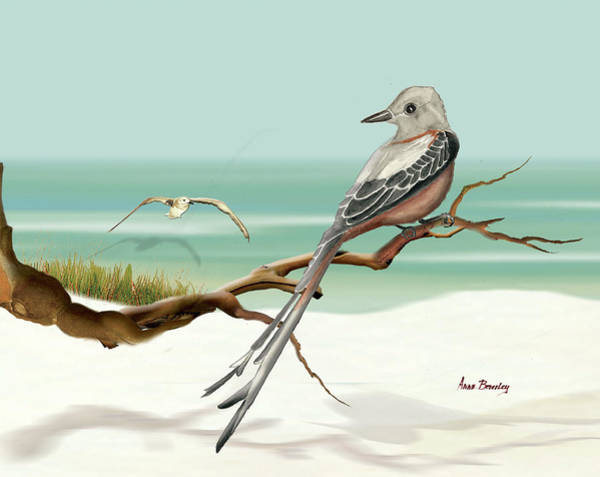Painting - Scissor Tailed Flycatcher by Anne Beverley-Stamps