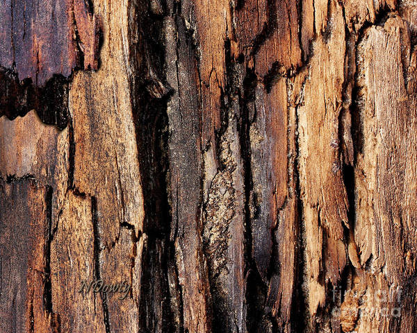 Scorched Timber Art Print