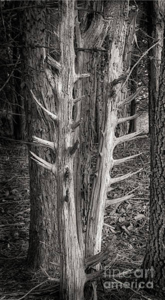 Scotopic Vision 4 - Trees Art Print