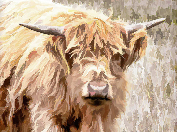 Photograph - Scottish Highland Cow by Jennifer Grossnickle
