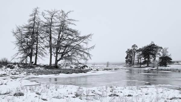 Photograph - Scotts Pines by Stephen Taylor
