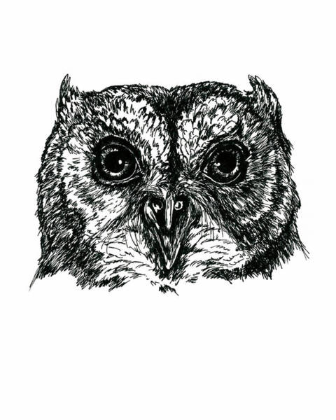 Nocturnal Drawing - Screech Owl Portrait In Ink by MM Anderson