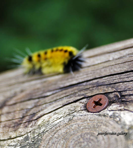 Photograph - Screwed Catepillar by Jennifer Robin