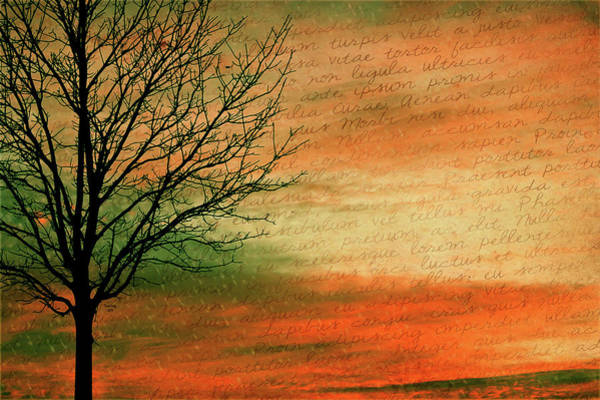 Mixed Media - Scribble At Sunset by Trish Tritz