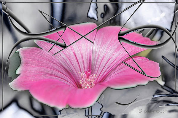 Photograph - Scribble Petals..... by Paul Vitko