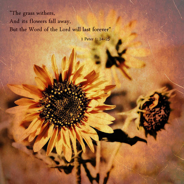 Scripture Photograph - Scripture - 1 Peter One 24-25 by Glenn McCarthy Art and Photography