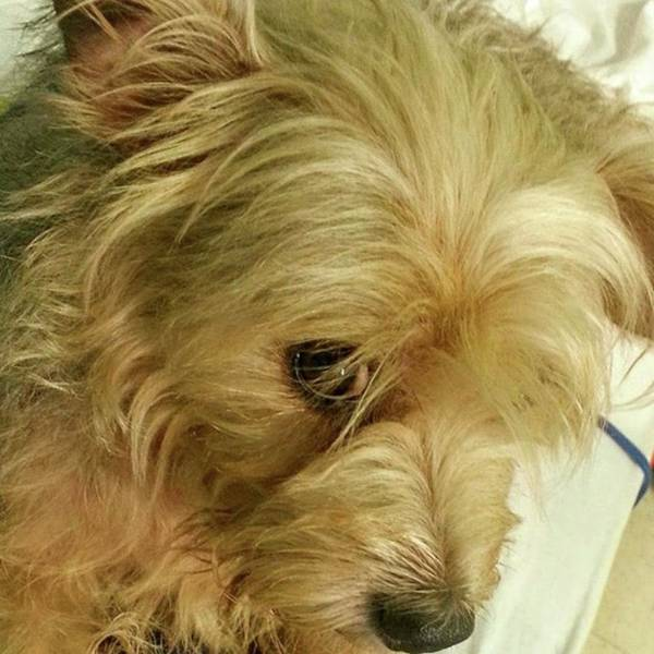 Photograph - Scruffy! A Very Sweet Dog! #nature by Cheray Dillon