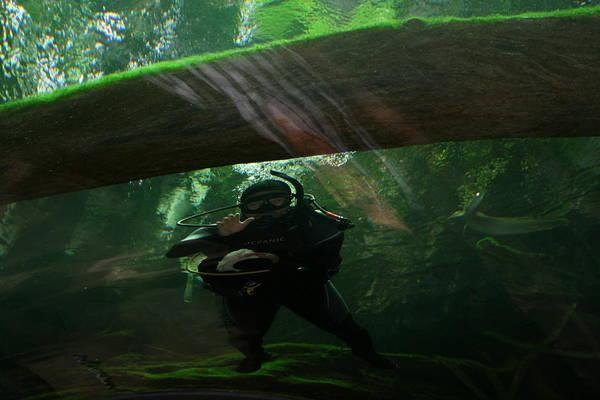 Photograph - Scuba Diver by Cynthia Marcopulos