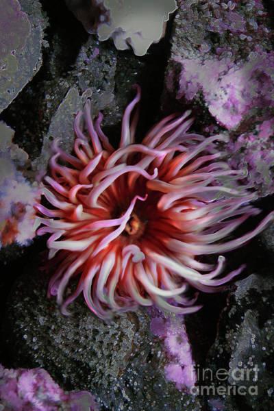 Sea Anemone 2 Art Print