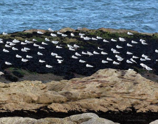 Sea Birds At Rest Art Print