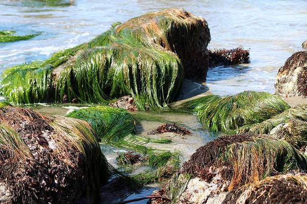 Photograph - Sea Grass  by Christy Pooschke