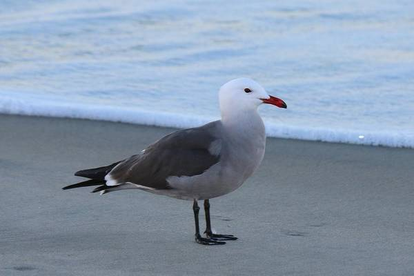 Photograph - Sea Gull On The Beach - 3 by Christy Pooschke