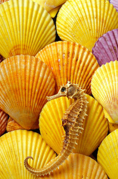 Seahorse Photograph - Sea Horse And Sea Shells by Garry Gay