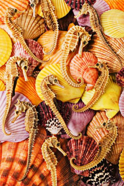 Seahorse Photograph - Sea Horses And Sea Shells by Garry Gay
