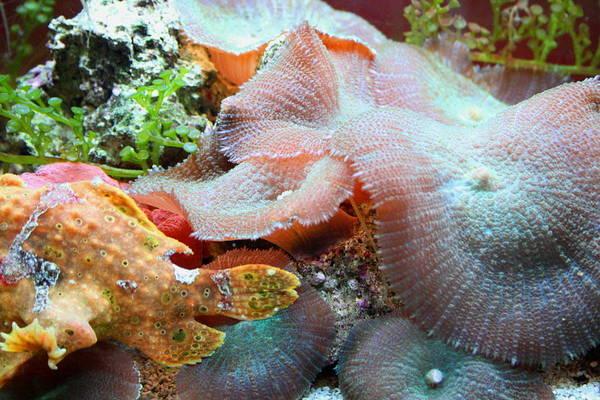 Photograph - Sea Life 2 by David Dunham